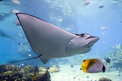 Snorkeling Adventure with Stingrays